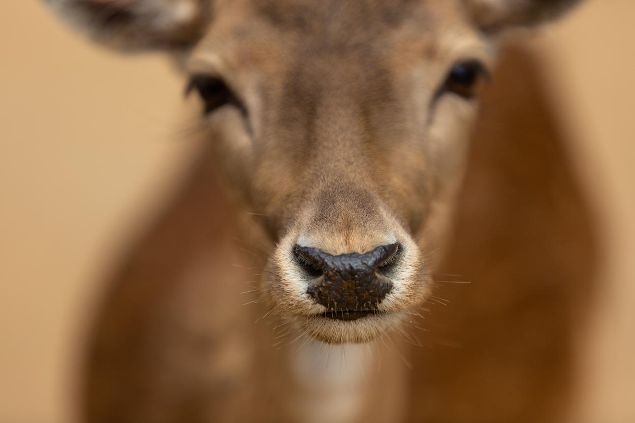 Job interview? Don't get the deer in the headlights look